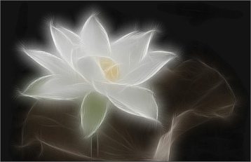 Painting kind of Lotus flower