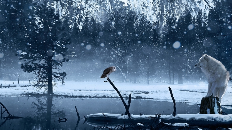 photo-frost-in-the-forest-wolf-and-owl