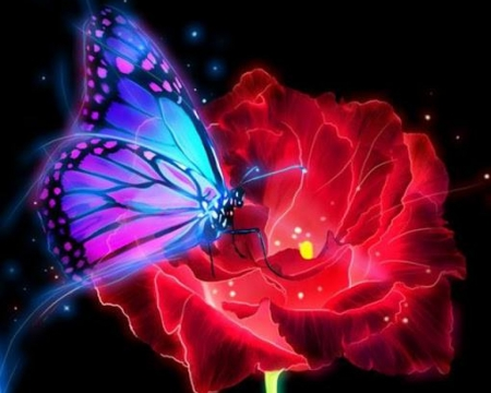 photo-redrose-and-butterfly