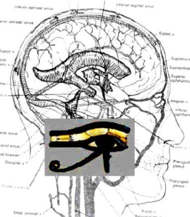 Eye of Osiris and the brain