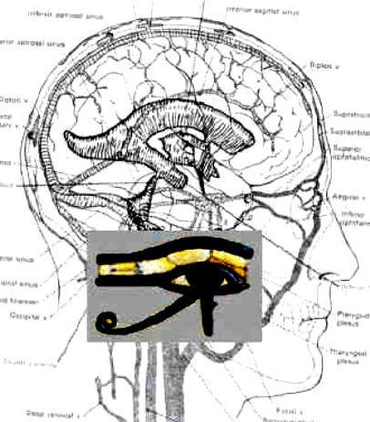 Eye of Osiris and the brain