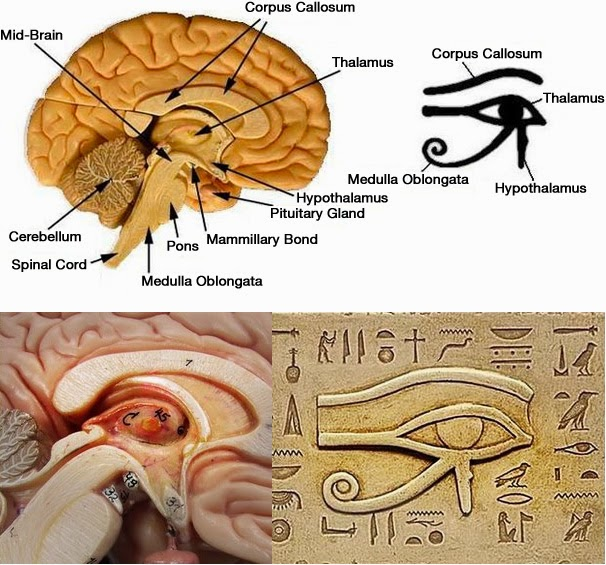 Pineal-gland and Eye of Ra mtm