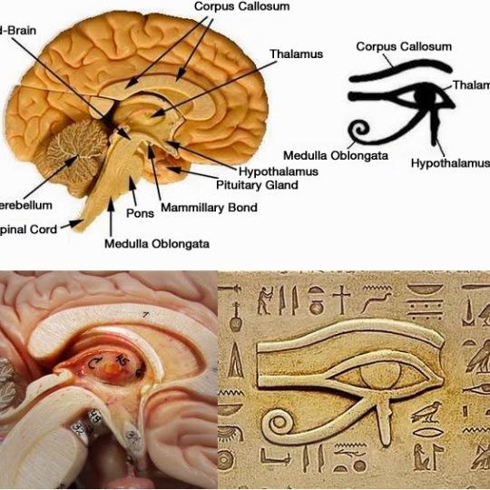 Pineal-gland and Eye of Ra mtm