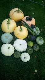 Pumpkin at home