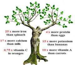 Moringa Tree of Life zim-herbs
